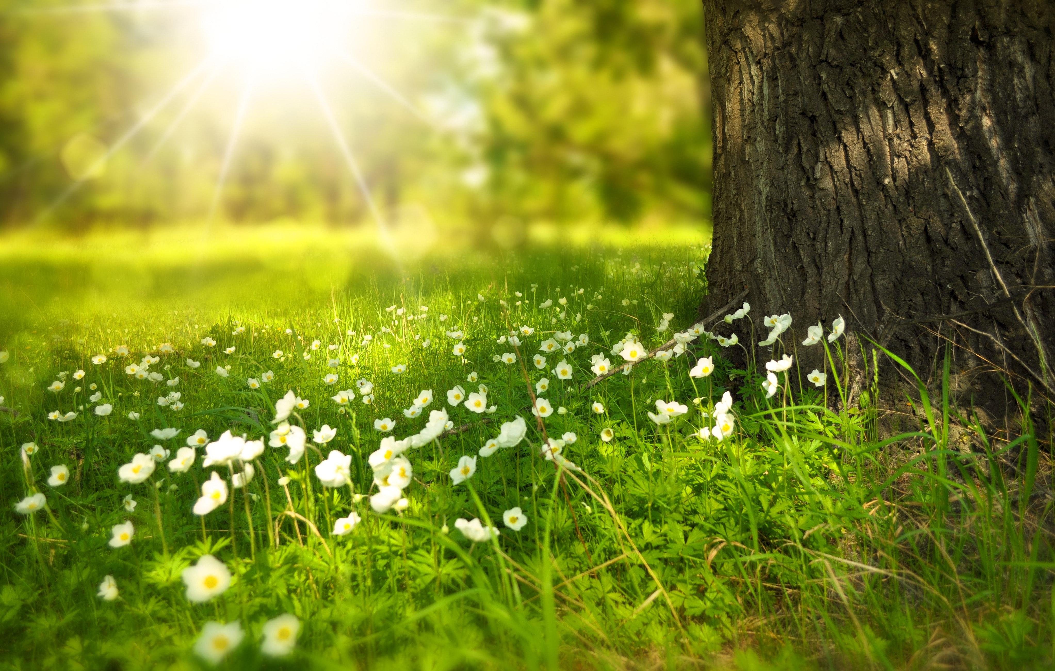 white blooming flowers under tree